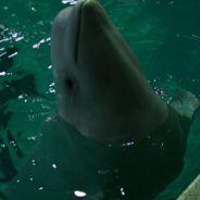 День Китов
