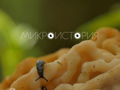 Программа «Микроистория» получила премию «За верность науке — 2020»!