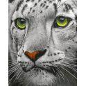 """Набор для рисования по номерам Цветной """"Белый тигр"""", 30 х 40 см"""