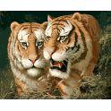 """Набор для рисования по номерам Цветной """"Любовь тигра"""", 40 х 50 см"""