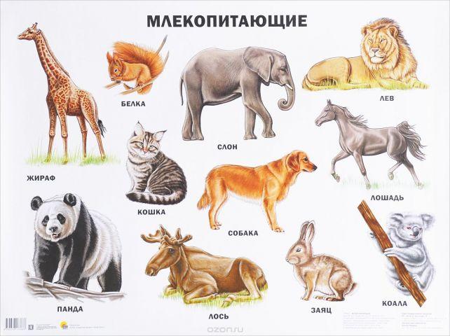 Млекопитающие. Плакат