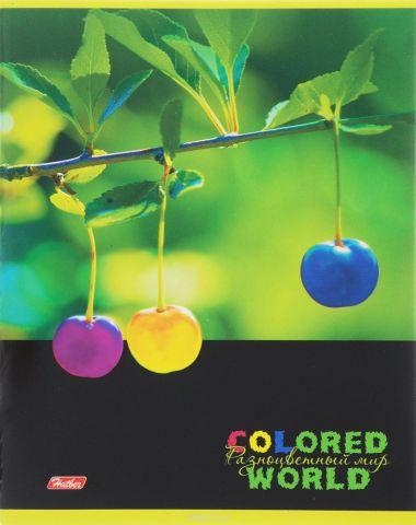Hatber Тетрадь Разноцветный мир 96 листов в клетку 14559